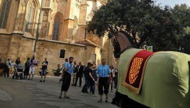 Mulassa de Tarragona